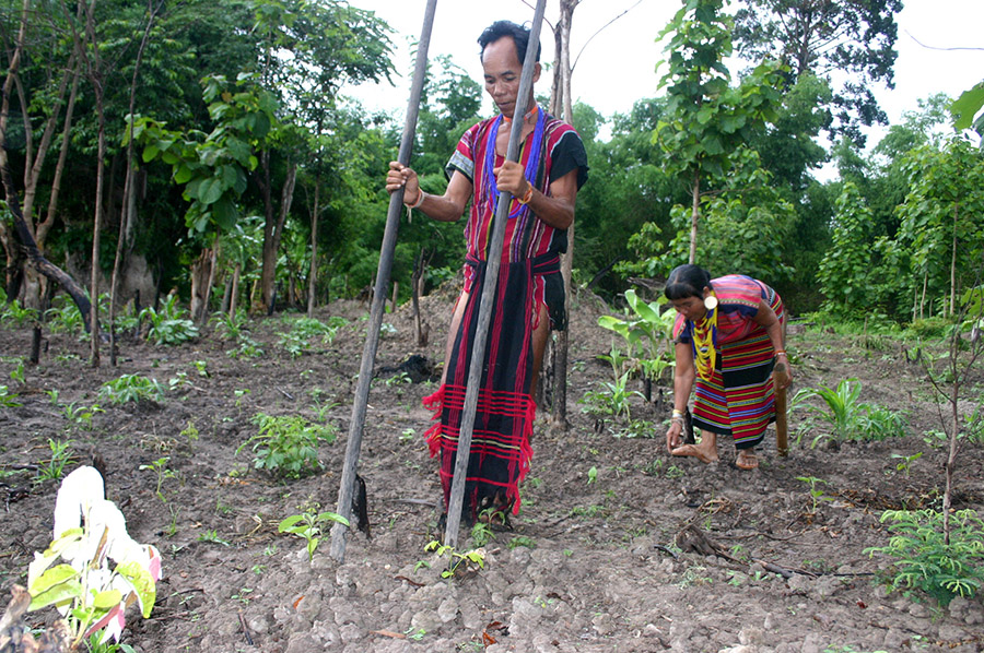 Brao_Couple_Planting_Food