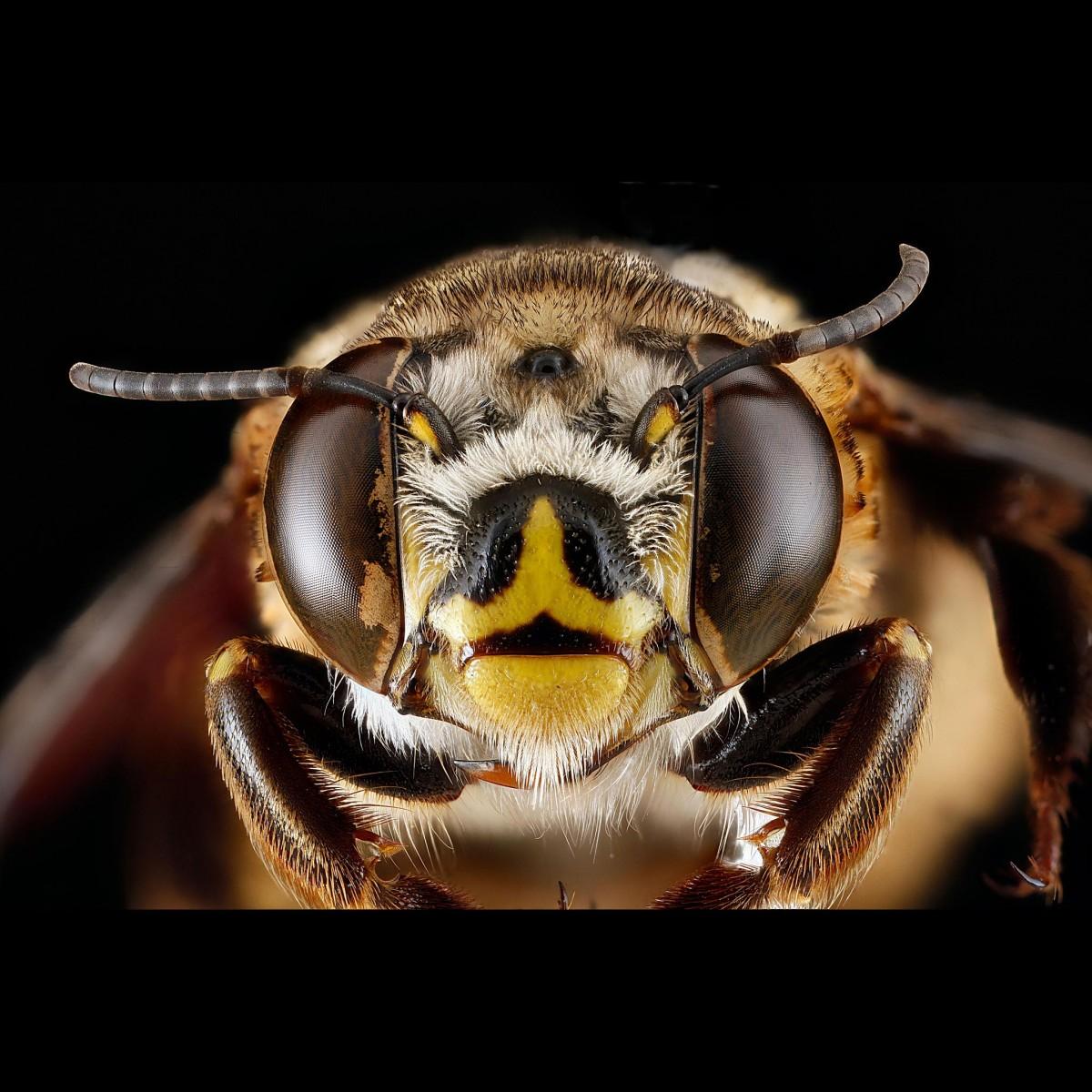 Arı ölümleri