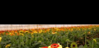 Türkiye'nin ilk, dünyanın en büyük geofit bahçesi