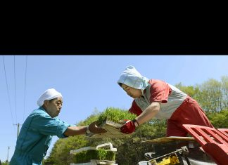 Fukuşima pirinçleri radyasyon testini geçti.