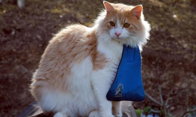 Kedi önlüğü