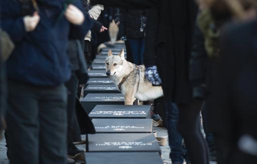 6 Şubat 2011'de Stokolm'de gerçekleşen avlanma karşıtı eylemlerde, eylemcilerin öldürülen kurtlar için hazırladıkları 20 adet tabut ve aralarında duran bir kurt köpeği.