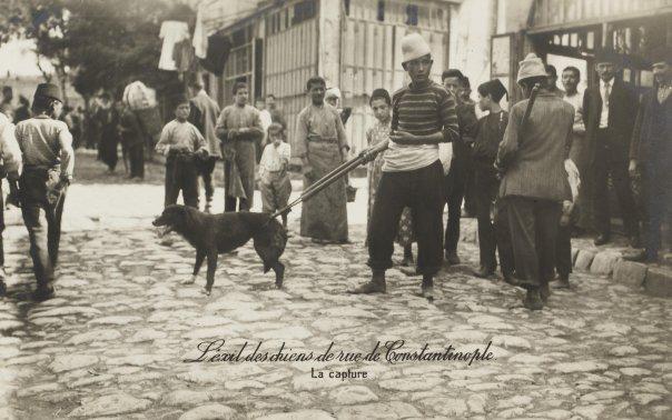 Sivriada'ya götürülmek üzere yakalanan binlerce köpekten sadece biri.