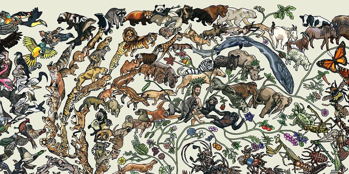 Evrim süreci ve ara formlar
