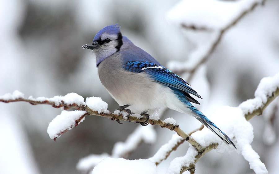 kışın bir kuş