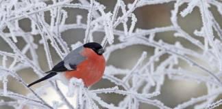 Kış aylarında kuşlara yardımcı olmak için yapmanız gereken 3 şey