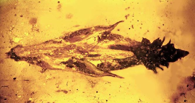 Dinozor Mantar Fosil