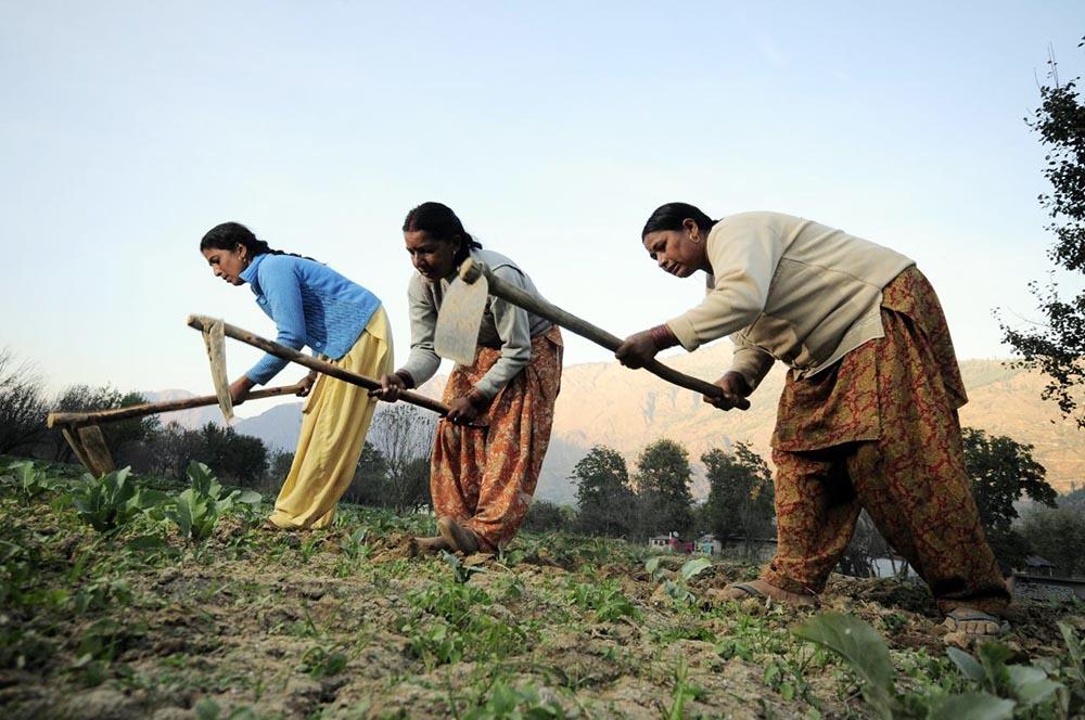 Hindistanlı çiftçi kadınlar