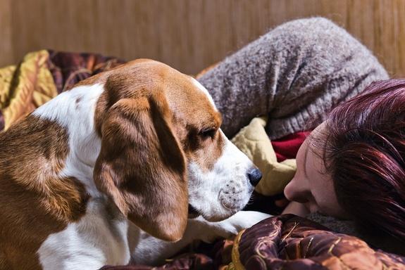 Köpek duyguları anlıyor