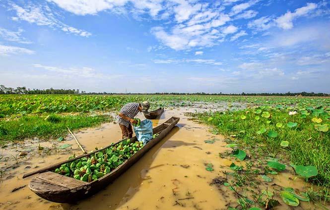 Kamboçya Tarım 2