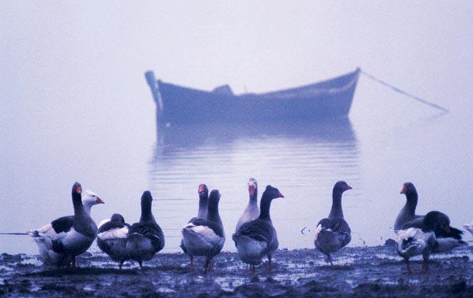 Manyas Gölü, Fotoğraf: Cüneyt Oğuztüzün