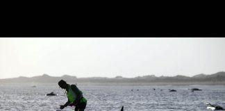 Yeni Zelanda'da 100 kara balina öldü