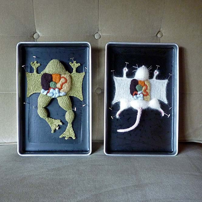 Anatomi Sanat 1