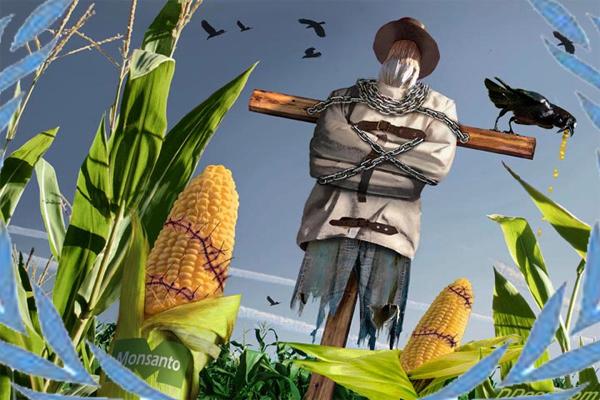 Monsanto tehlikeli
