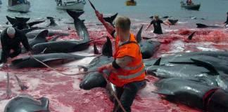 20. yüzyılda yaklaşık 3 milyon balina öldürüldü