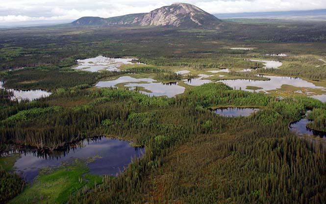 Kanada'daki Boreal ormanları. (Görsel: National Geographic)