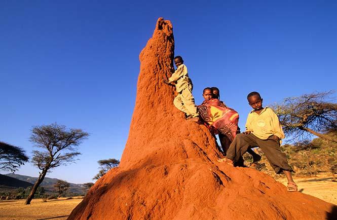 Etiyopyalı çocuklar bir termit tepesinde oturuyorlar. (Görsel: National Geographic)