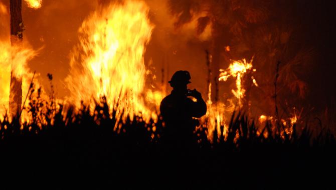 Vahşi Yangınlar