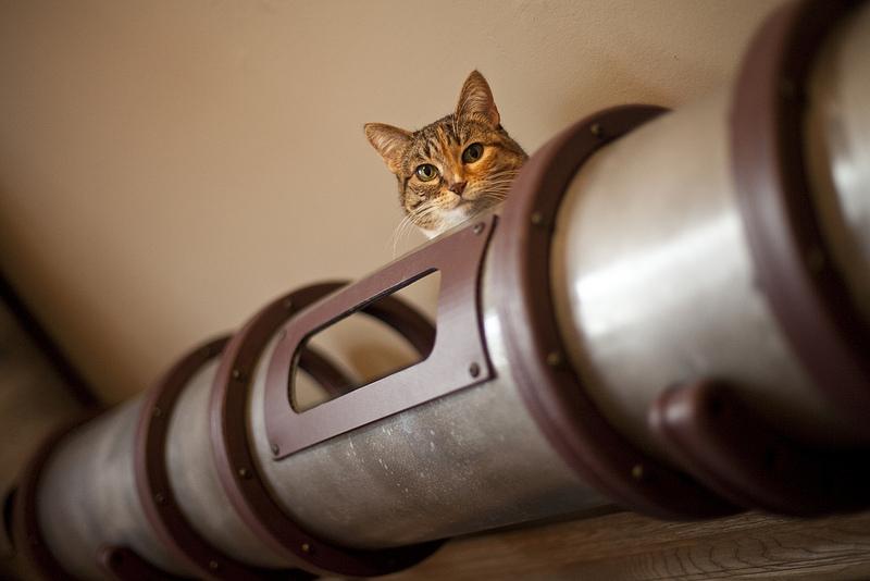 kedi geçiş sistemi, tasarım, hayvanlar