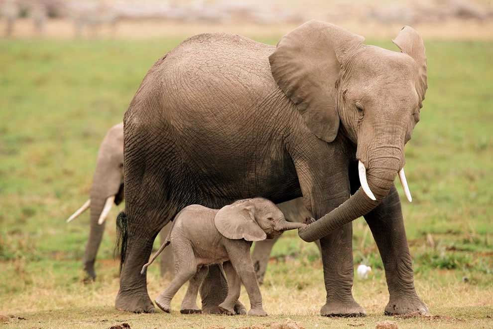 Anne fil ve bebeği