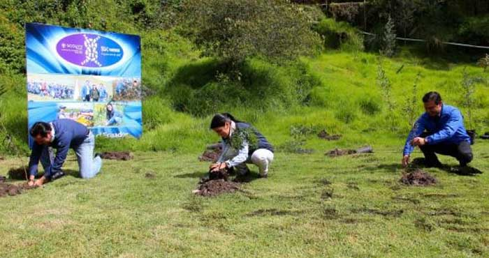 Ekvador Ağaçlandırma Projesi