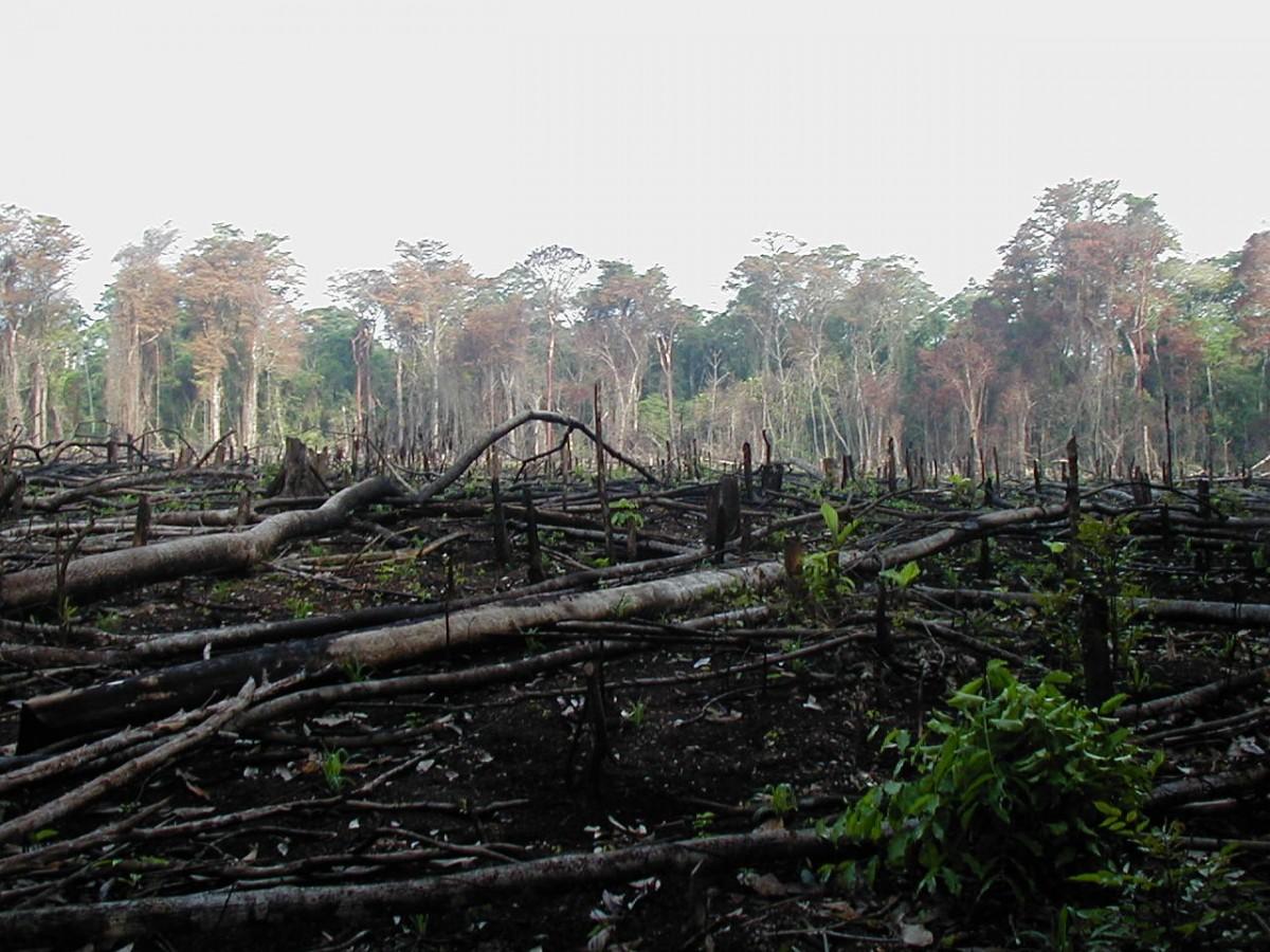 Lacanja_burn, ekolojik yıkım