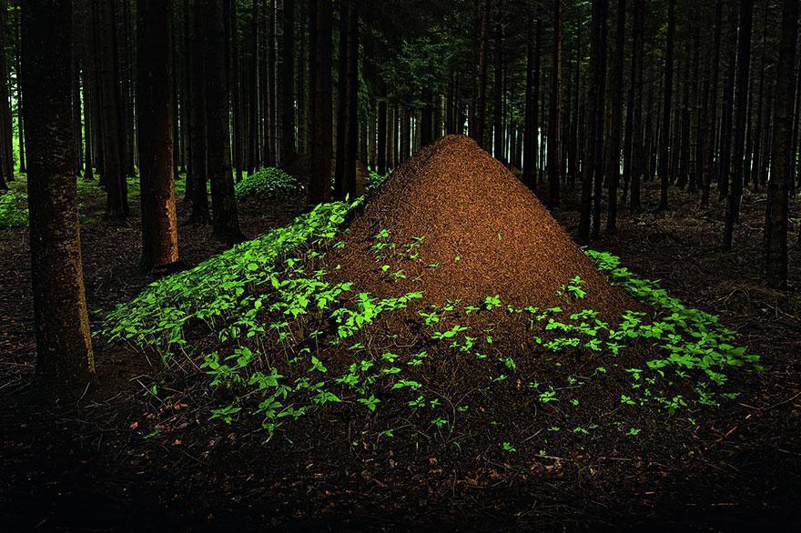 animal-architecture-nests-10