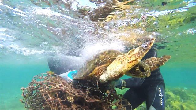 150608-hawaii-sea-turtle-rescue-vin_640x360_459701827582