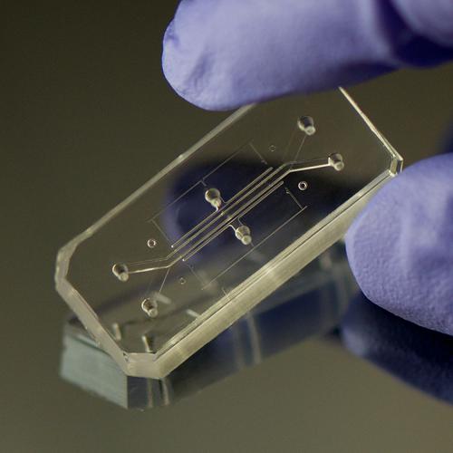 3033574-slide-organs-on-a-chip-photos-19b