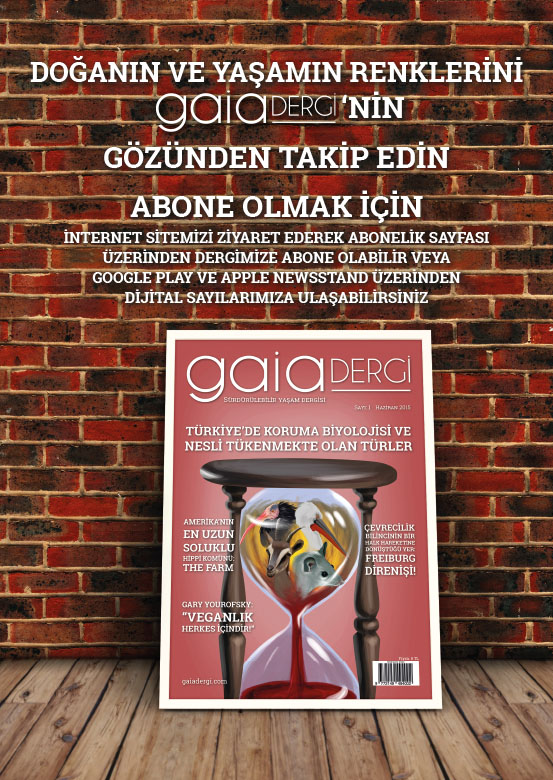 Gaia Dergi 11 Sayılık Arşiv