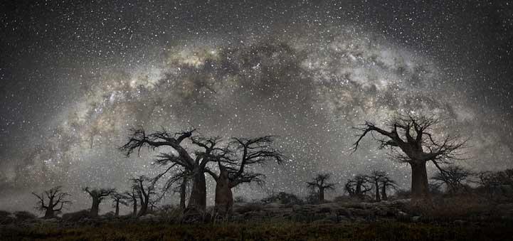 Andromeda Dünyanın en kadim Dünyanın en kadim ağaçlarının gecenin koynuna yükselişi Andromeda