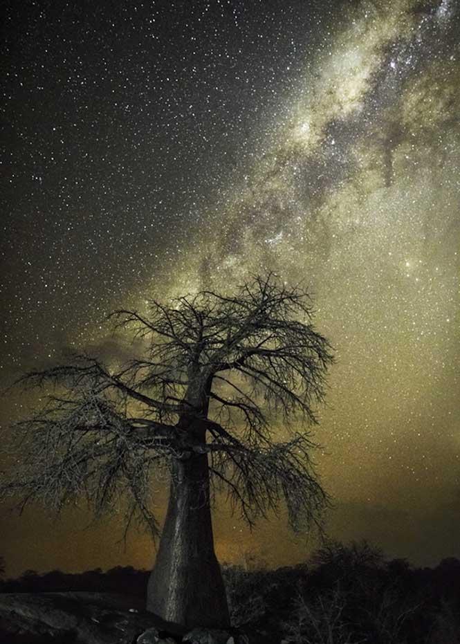 Dünyanın en kadim  Dünyanın en kadim  Dünyanın en kadim   Dünyanın en kadim Dünyanın en kadim ağaçlarının gecenin koynuna yükselişi Aquila