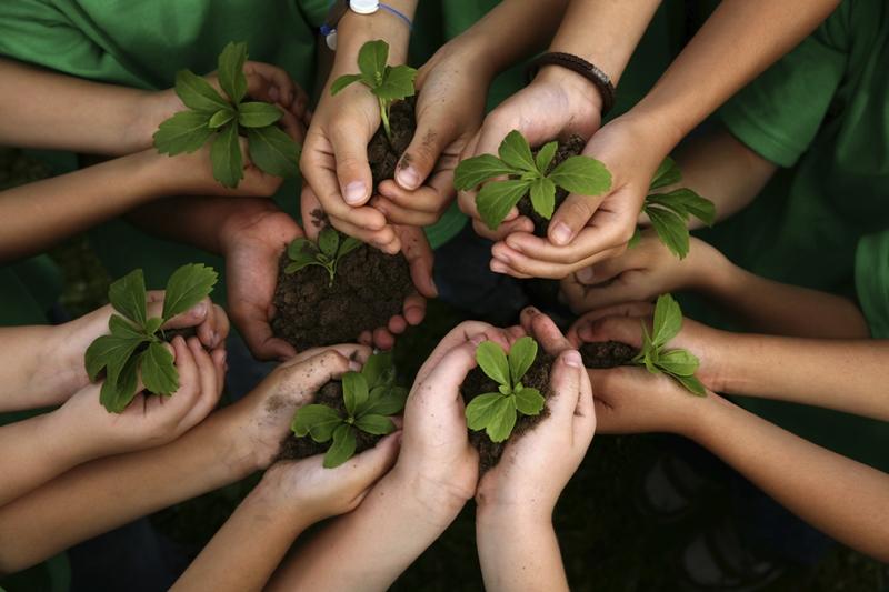 BMC-Environmental-and-Land-based-studies (1)