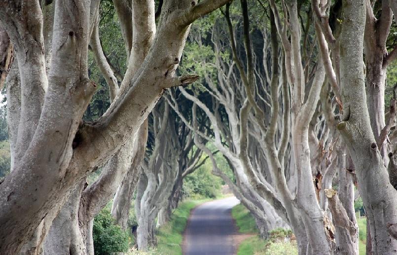 Ballymoney Karanlık Ağaçlık1