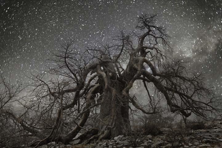 Hydra Dünyanın en kadim Dünyanın en kadim ağaçlarının gecenin koynuna yükselişi Hydra