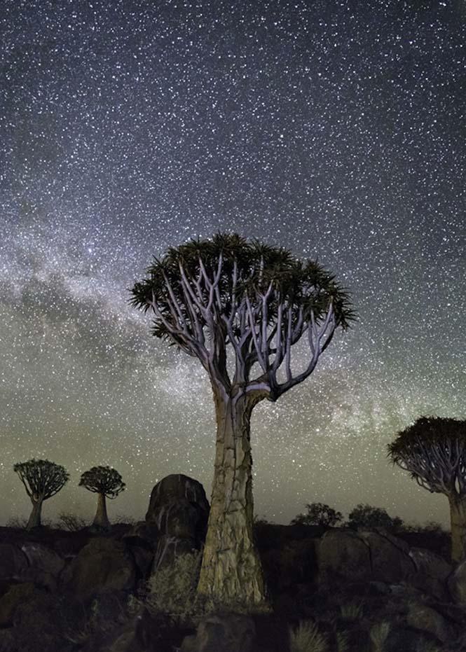 Izar Dünyanın en kadim Dünyanın en kadim ağaçlarının gecenin koynuna yükselişi Izar
