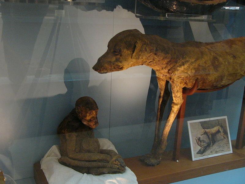 Köpek Mumyaları 11
