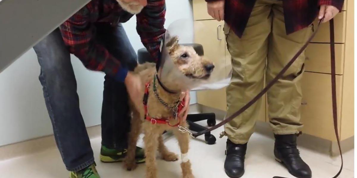 Gözleri görmeyen Duffy'nin ameliyat sonrası ailesini görme sevinci