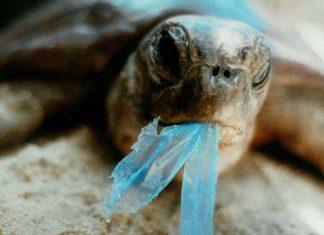 Hayalet balıkçı ağları ve atıklar deniz kaplumbağaları için tehlike oluşturuyor