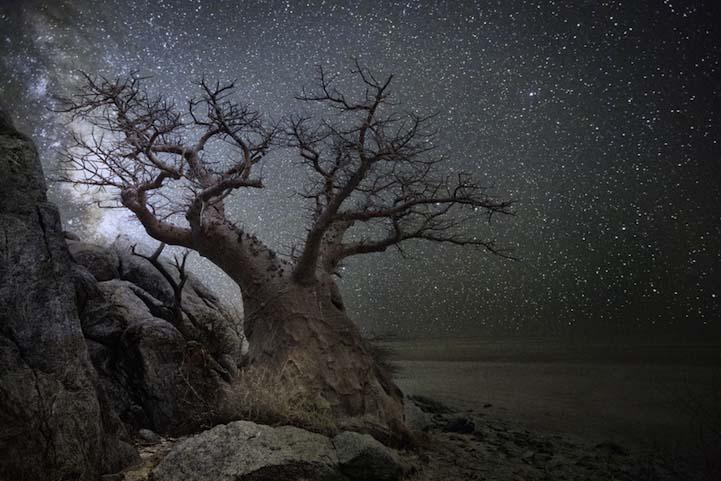 Lyra Dünyanın en kadim Dünyanın en kadim ağaçlarının gecenin koynuna yükselişi Lyra