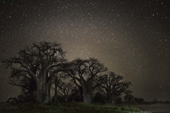 Tucana Dünyanın en kadim Dünyanın en kadim ağaçlarının gecenin koynuna yükselişi Tucana