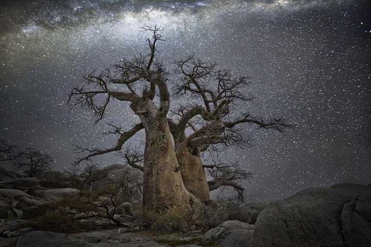 Vela Dünyanın en kadim Dünyanın en kadim ağaçlarının gecenin koynuna yükselişi Vela