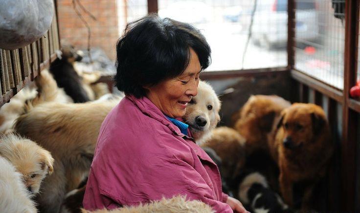 Yulin Festivali, Yang Xiaoyun 2