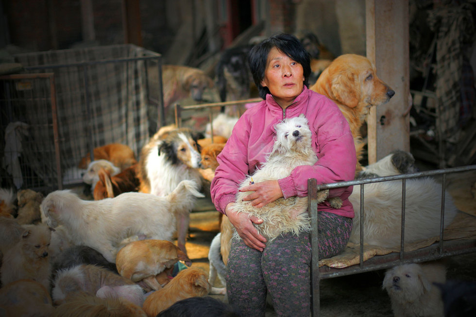 Yulin Festivali, Yang Xiaoyun
