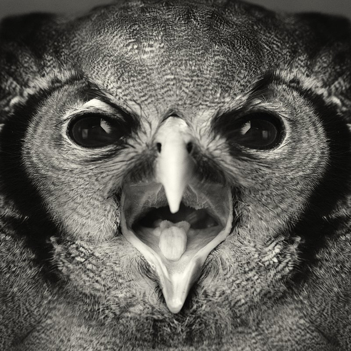 İnsan diliyle konuşmayan hayvanların karmaşık duygularını anlatan fotoğraflar