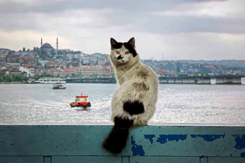 haber fotoğrafı (2)  Yasaya göre Türkiye'de insan hariç her canlı eşya kategorisinde sayılıyor haber foto C4 9Fraf C4 B1 2