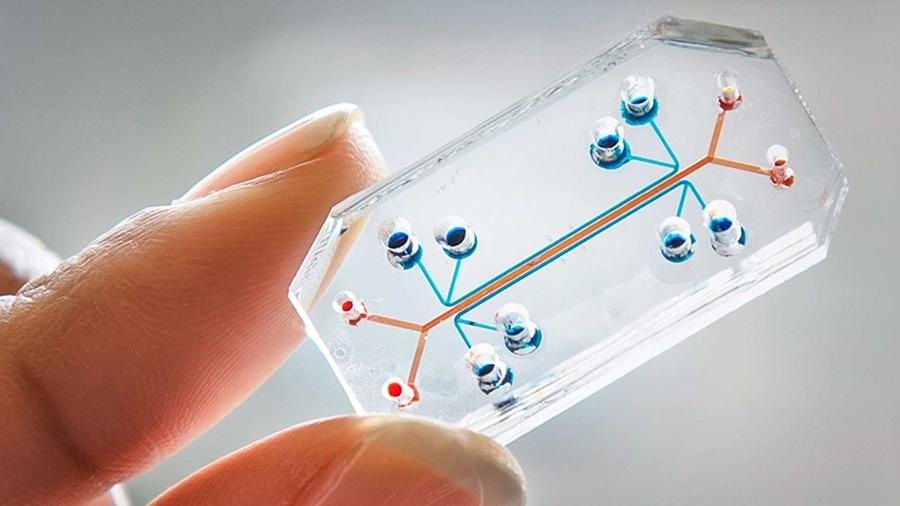 organ-chip A human lung-on-a-chip.