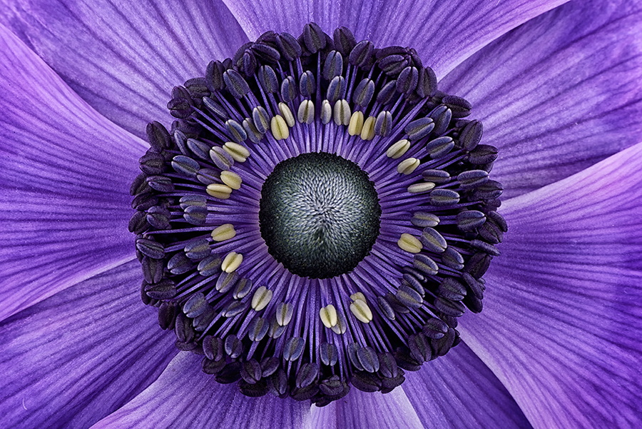 Anemone by Mark Johnson on 500px
