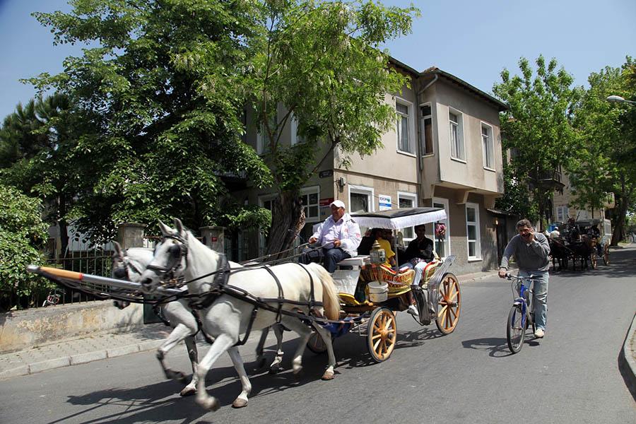 Burgazada'daki ve diğer adalardaki fayton işkencesi her yıl atların ölümleriyle sonuçlanıyor.