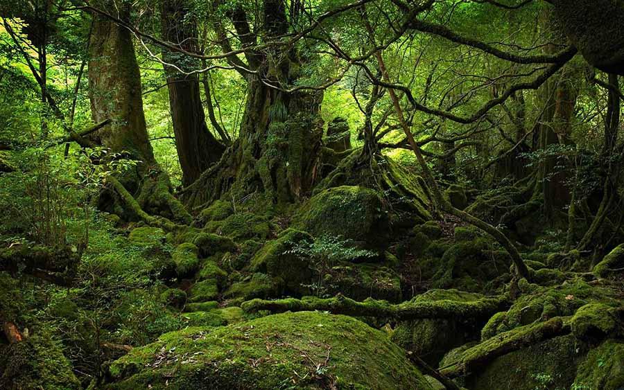 İntihar Ormanı: Aokigahara 2